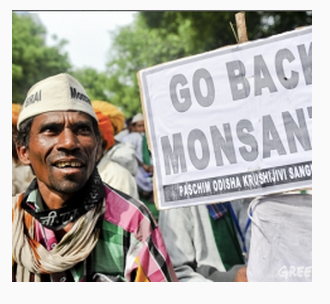 India emerging as epicenter of GMO crop research but foreign financed protests slow adoption