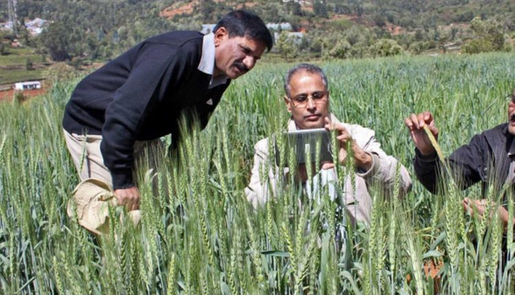 Using information technology to keep track of disease in wheat