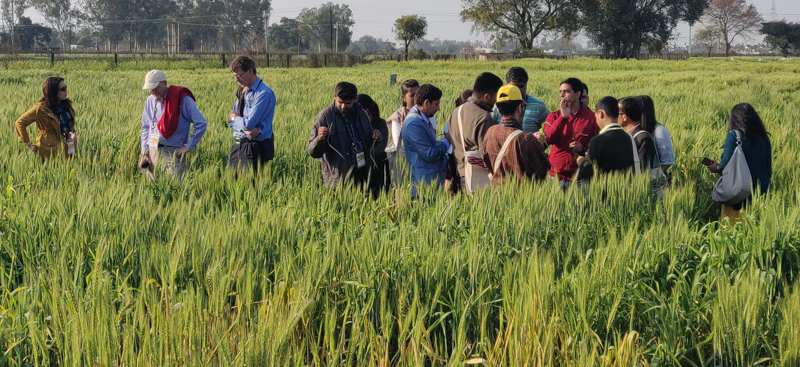 South Asian scientists trained on 'art and science' of wheat rust research
