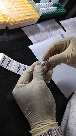 Labelling the tubes with barcodes. Photo by Poornima Gade