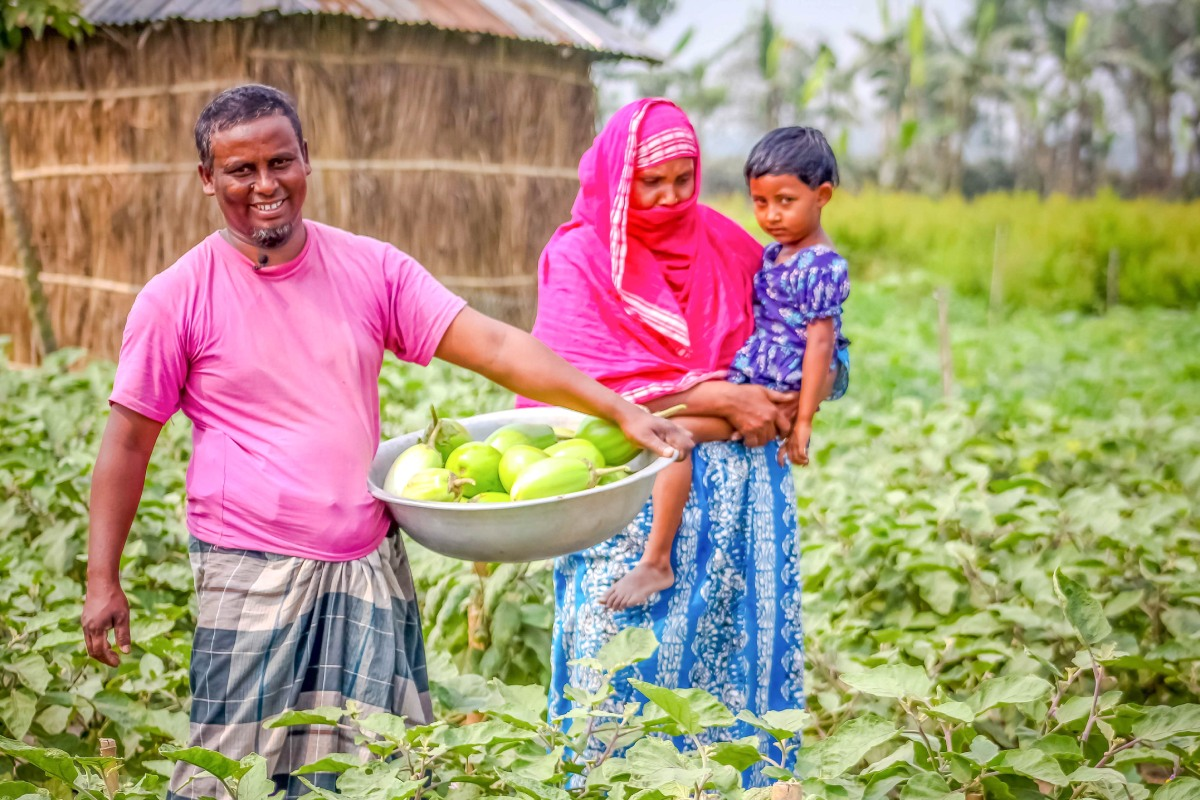 Impact of Bt Brinjal Cultivation in the Market Value Chain in Five Districts of Bangladesh