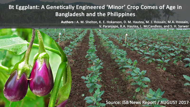 Bt Eggplant: A Genetically Engineered 'Minor' Crop Comes Of Age In Bangladesh And The Philippines
