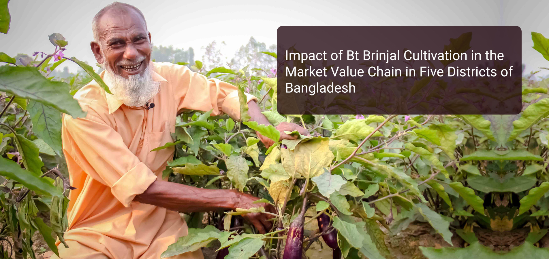 impact-of-bt-brinjal-cultivation-in-the-market-value-chain-in-five-districts-of-bangladesh