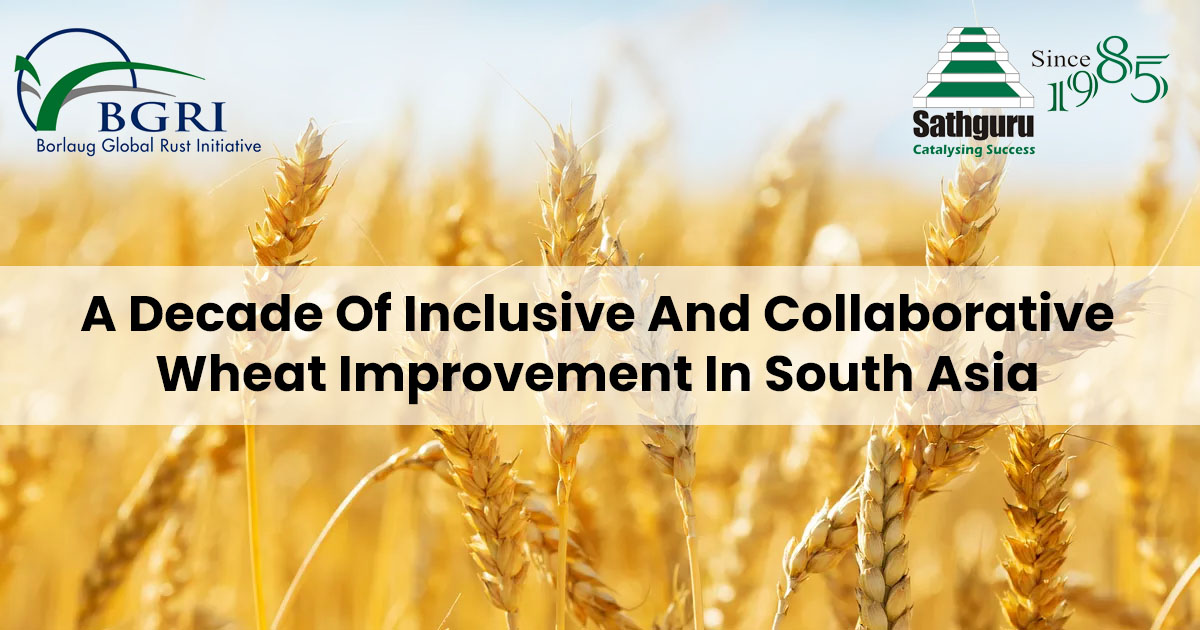 A Decade Of Inclusive And Collaborative Wheat Improvement In South Asia