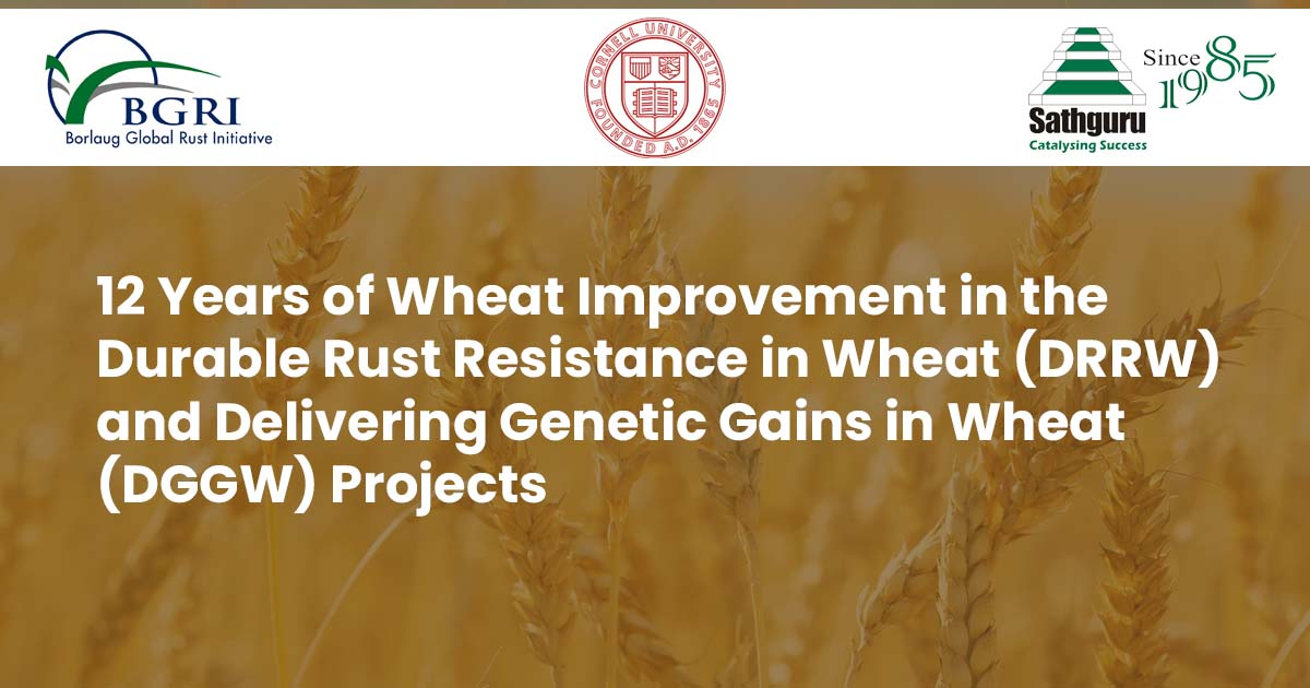 12 Years of Wheat Improvement in the Durable Rust Resistance in Wheat (DRRW) and Delivering Genetic Gains in Wheat (DGGW) Projects