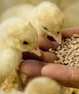 FSPCA Preventive Controls For Animal Food