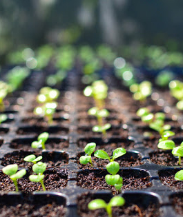 Seed-Industry-Program