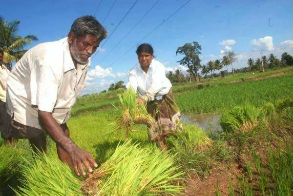 Hyderabad's Sathguru raising $100M fund for food & agriculture startups