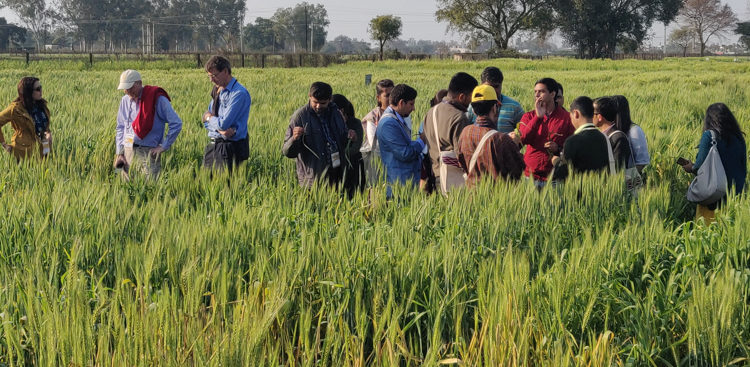 SAARC wheat rust training programme