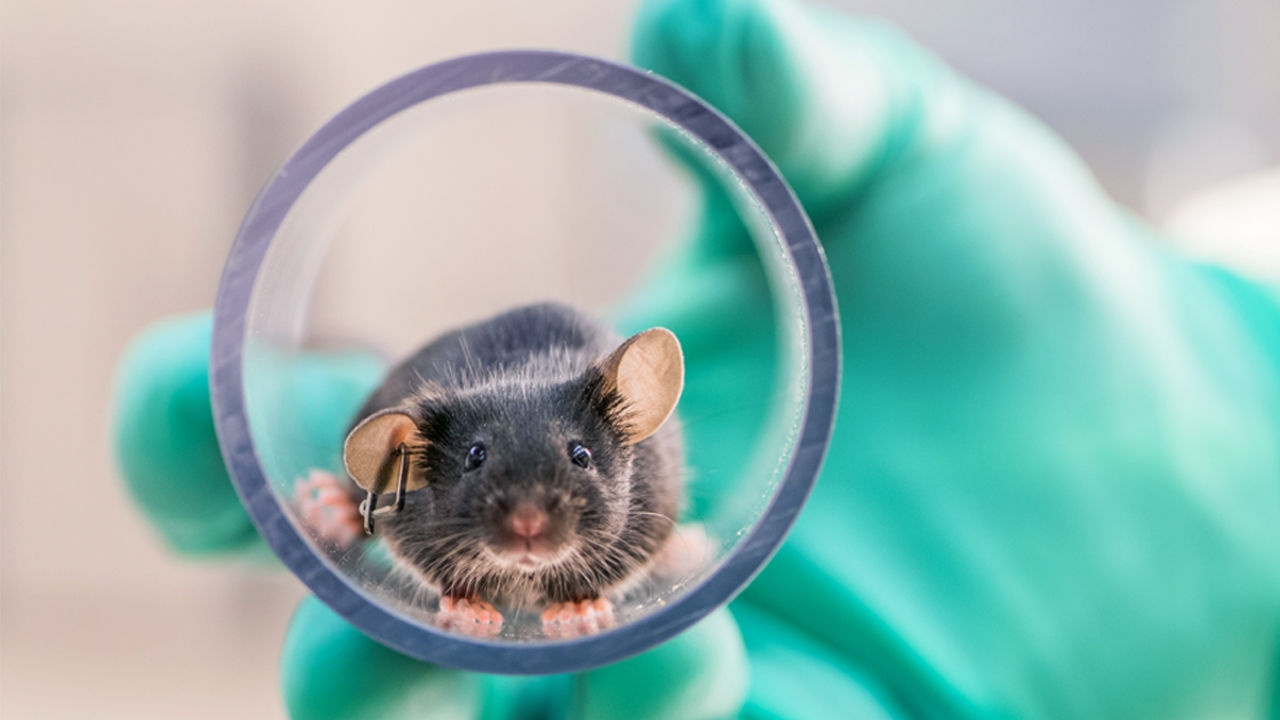 https://www.sathguru.com/wp-content/uploads/2020/07/need-assessment-business-model-for-a-laboratory-animal-breeding-facility.jpg