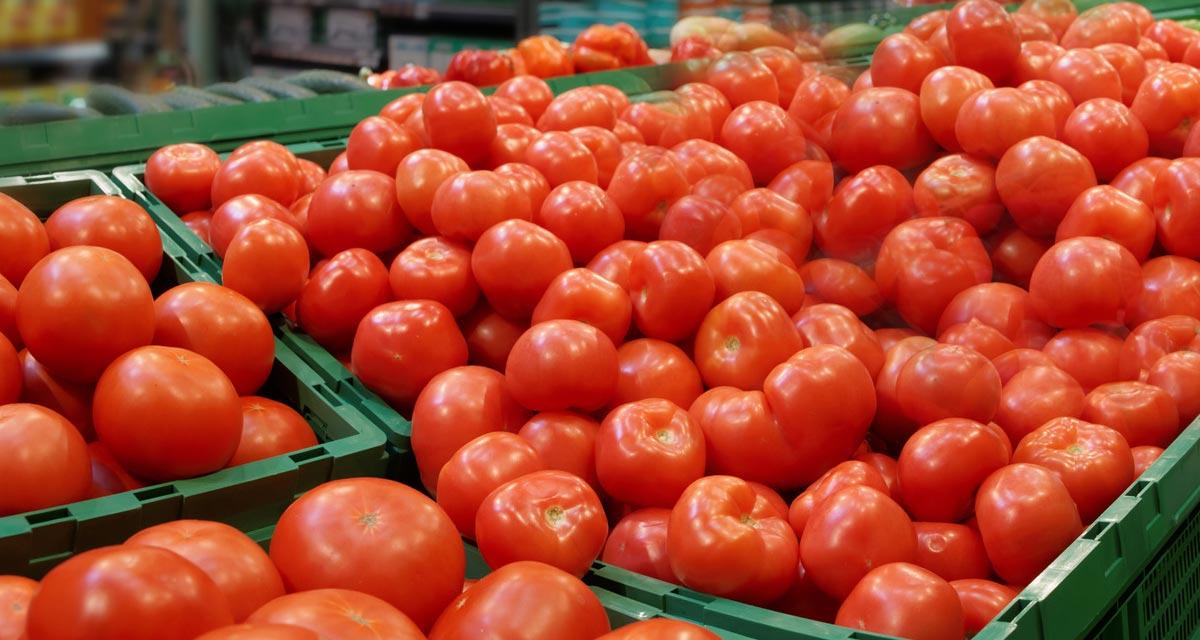 https://www.sathguru.com/wp-content/uploads/2021/06/long-shelf-life-tomato-trait.jpg